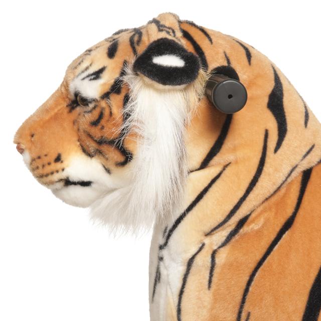 Tigre Shirkan Mediano Profesional - zoom cabeza