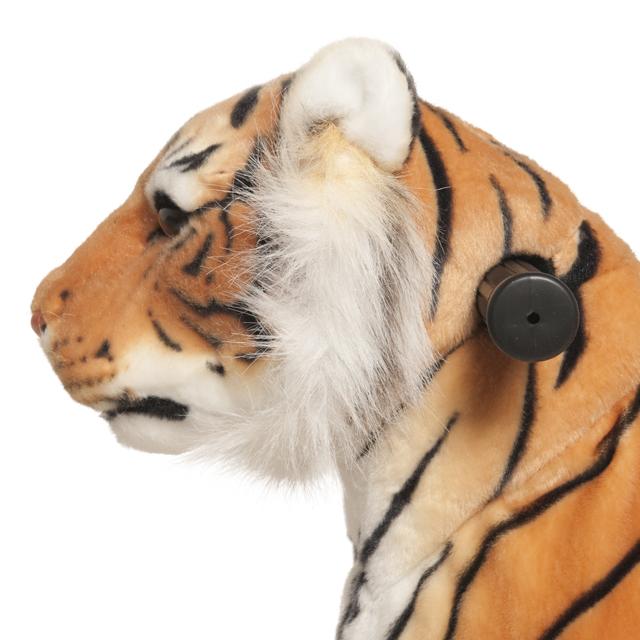 Tigre Shirkan Pequeño - zoom cabeza